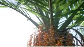 Laubwerk - Plants Kit